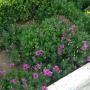 桃峰陵园路边的花