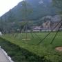 桃峰陵园园区草坪