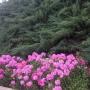 桃峰陵园园区道路边上的鲜花