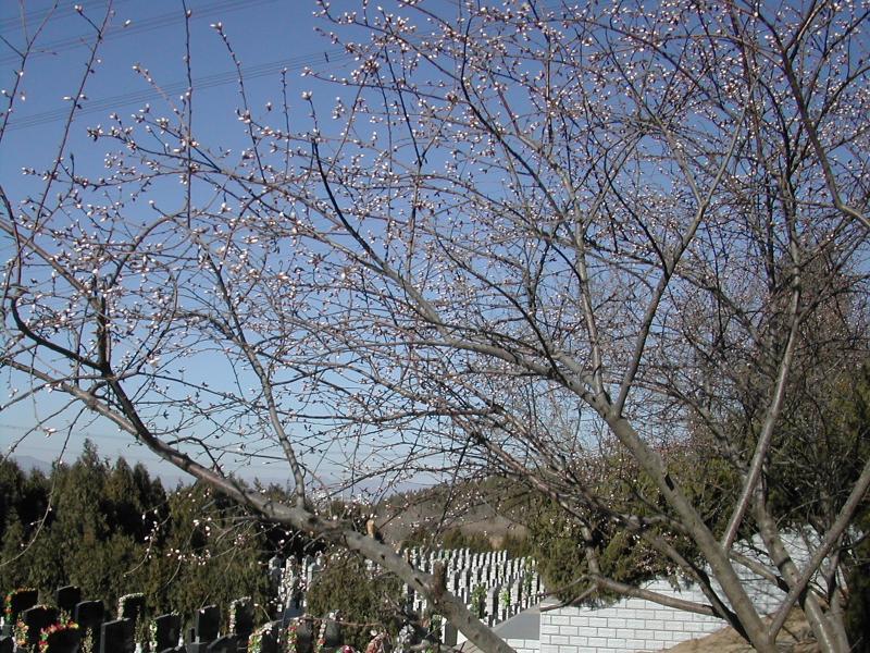 九里山公墓春季墓区
