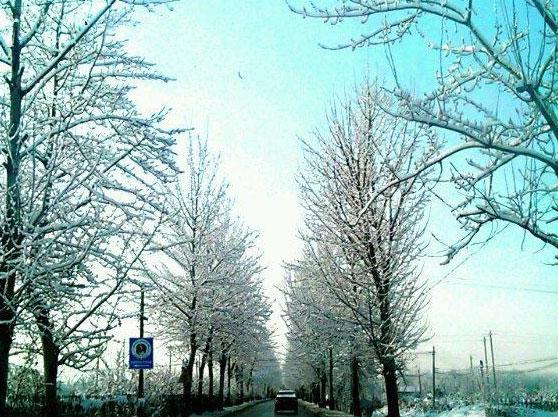冬日里的通惠陵园