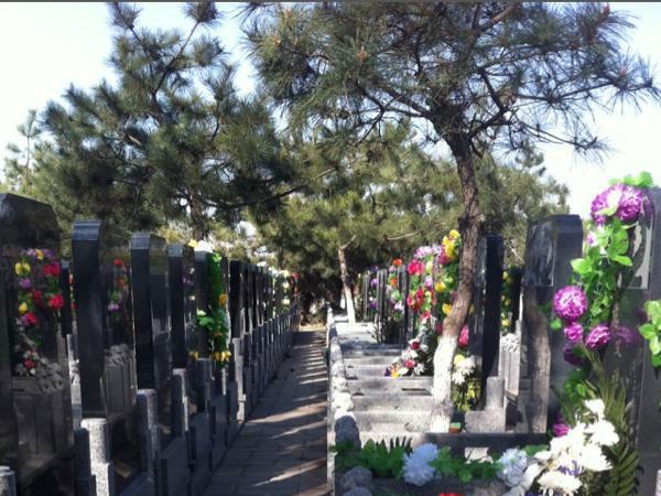 通惠陵园墓区环境