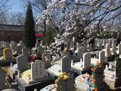 华夏陵园墓区环境
