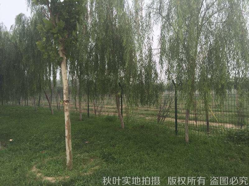 龙凤园公墓景观