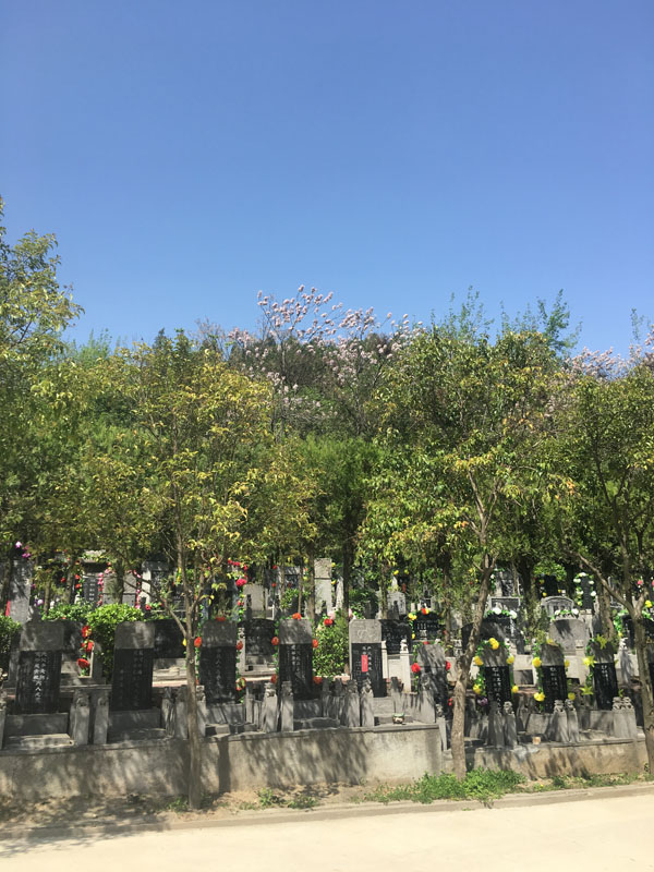 九龙山墓区绿化