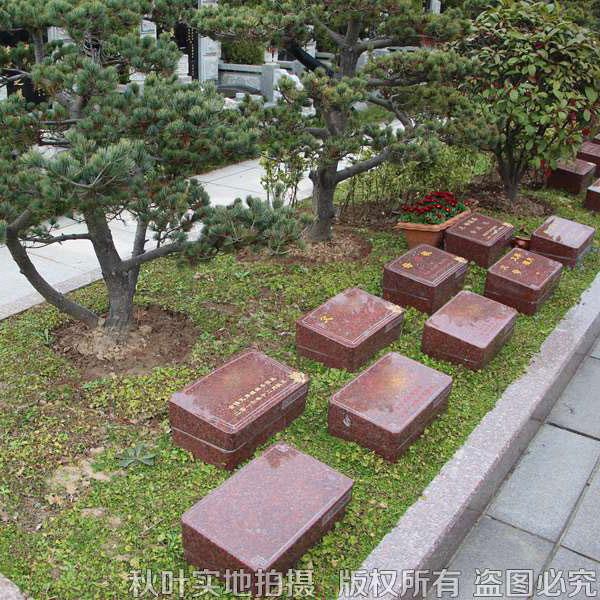 恩卓园树葬