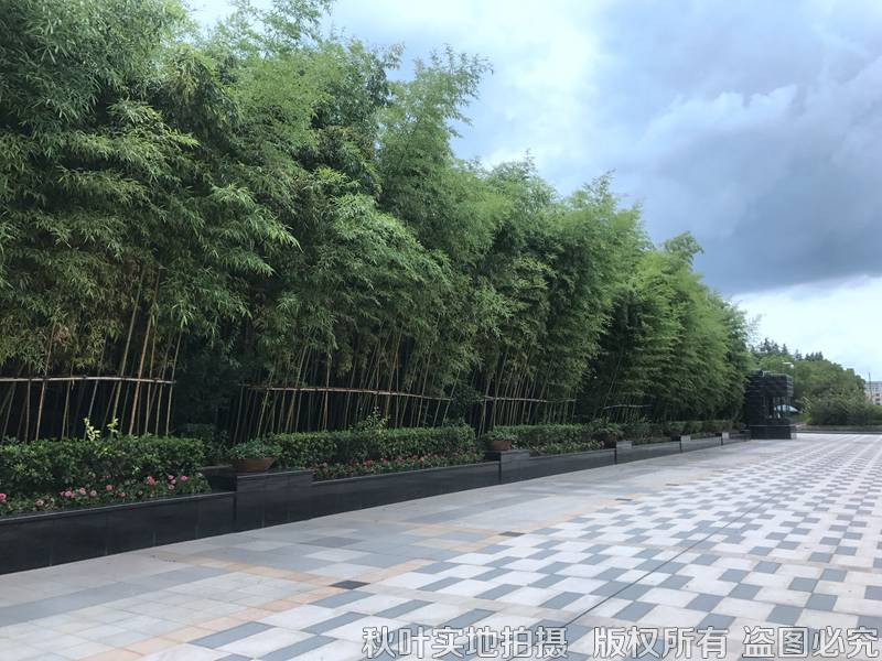 清竹园环境