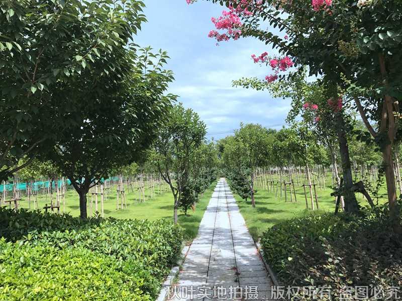 望仙安息园景观