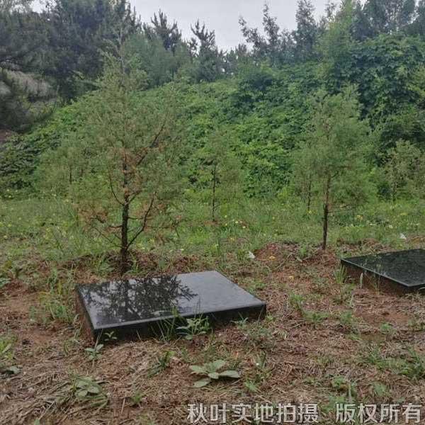 紫东园树葬